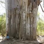 Nolan devant un gros baobab