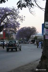 mbeya-jakarandas