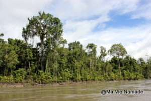 arbres-rives (1)