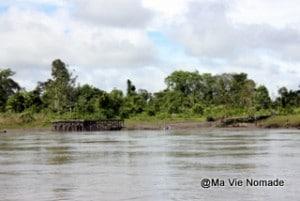 arbres-rives (2)
