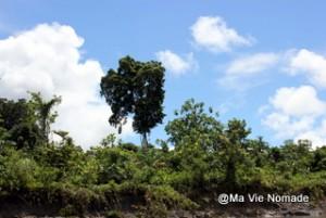 arbres-rives (3)