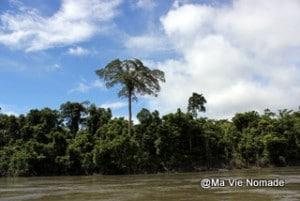 arbres-rives (4)
